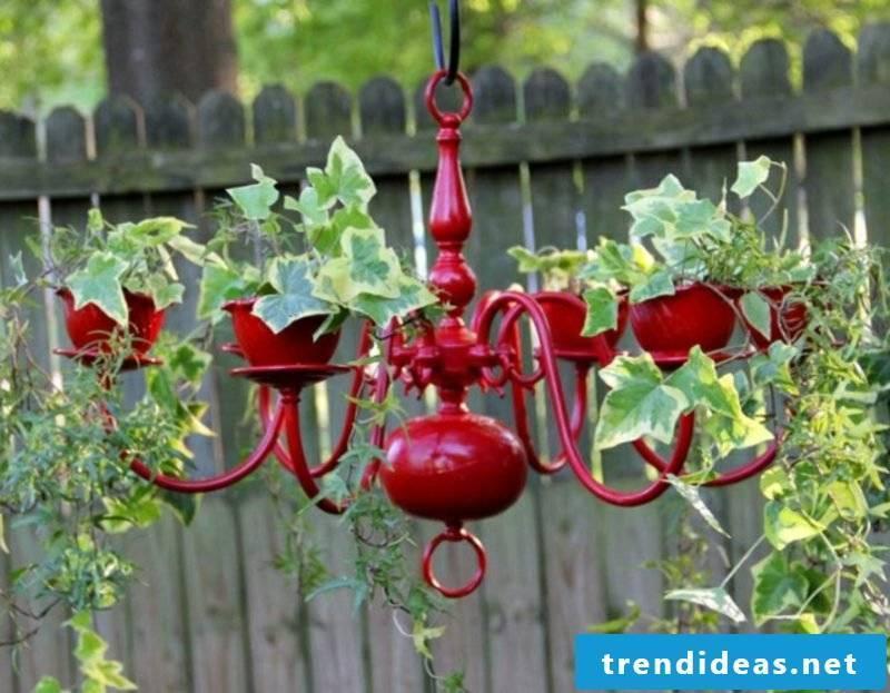 Garden ideas for little money chandelier climbing plant