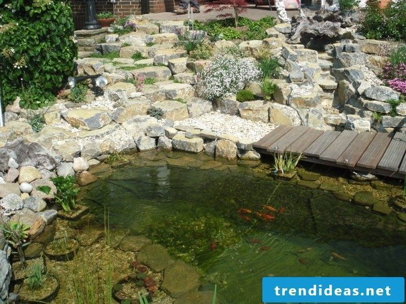 Gardening Ideas Pond with golden fish