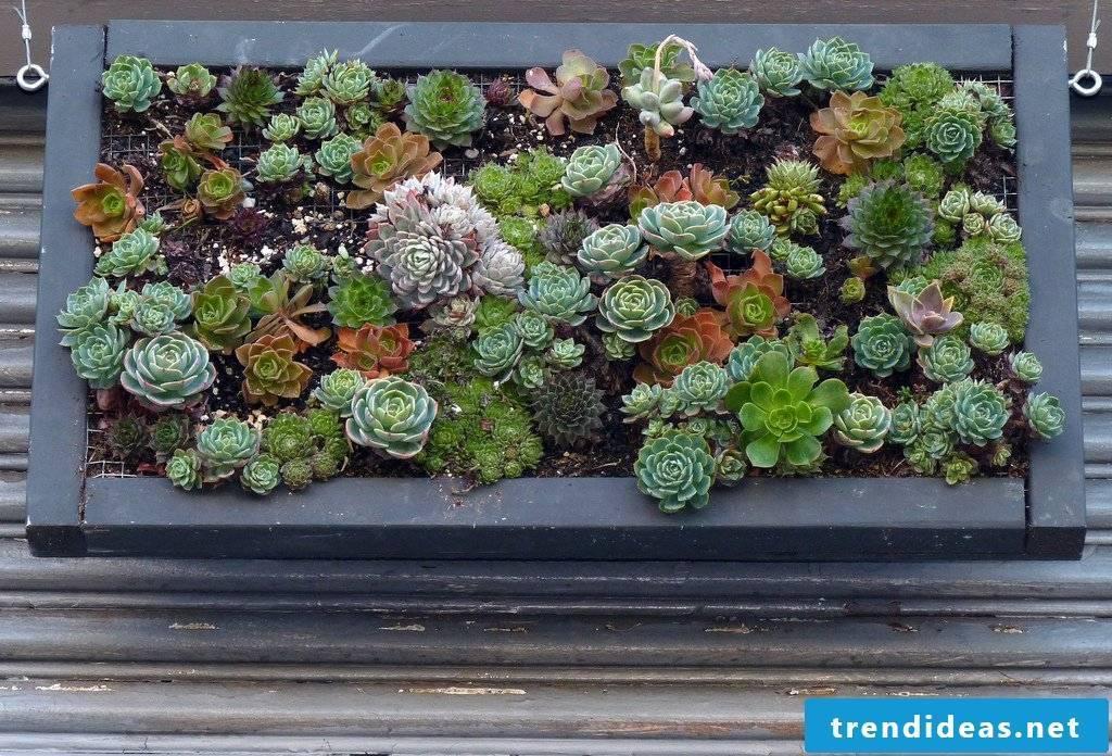 Flowers in winter? - Read creative ideas for a flowerpot yourself!