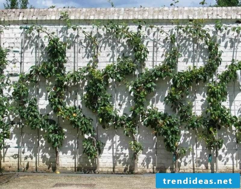 S-trellis fruit grow creative ideas