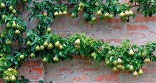 Growing trellises - great idea for the small garden