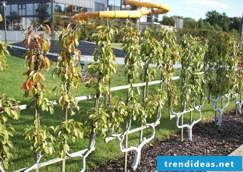 Fruits grow Matall double-U shape