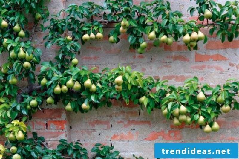 Trellis fruit grow creative ideas of small garden