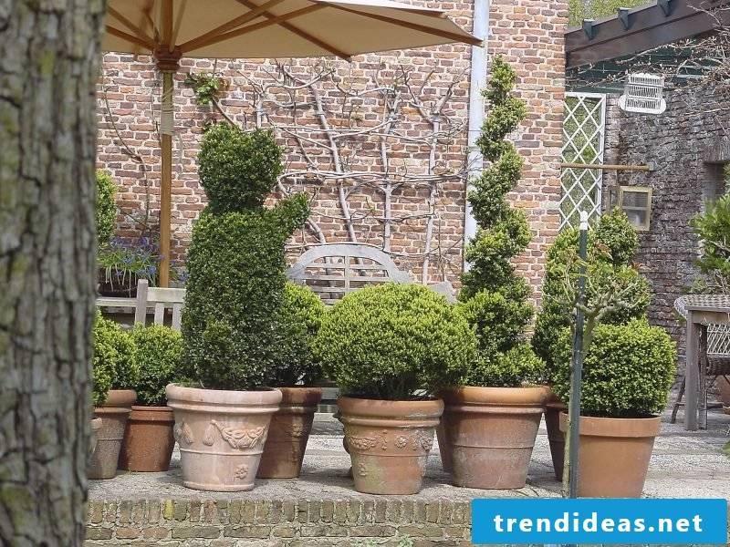 hardy balcony plants green