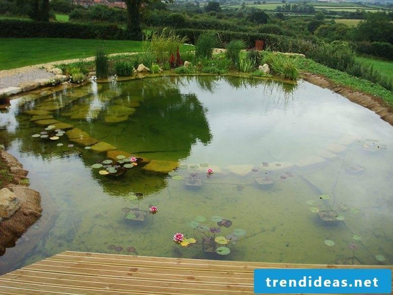 Swimming pond costs modern