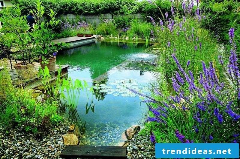 swimming pond costs in the yard