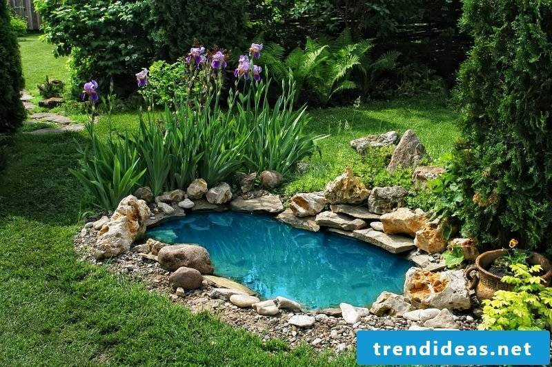 Swimming pond costs in the garden