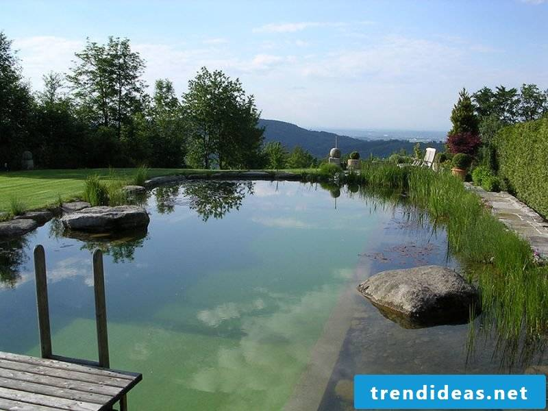 swimming pond costs big