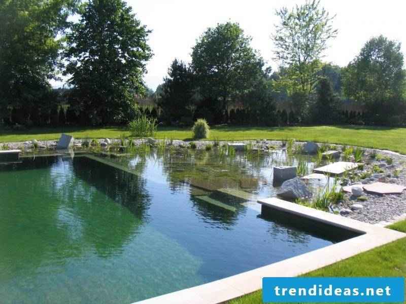 swimming pond cost cheap