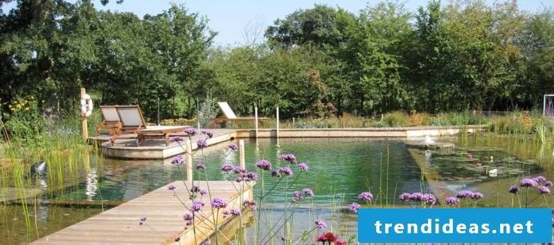 swimming pond cost price