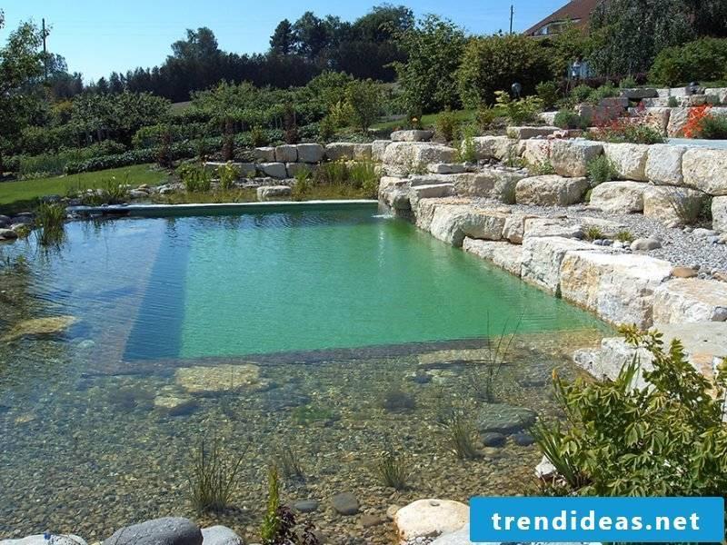 swimming pond cost original
