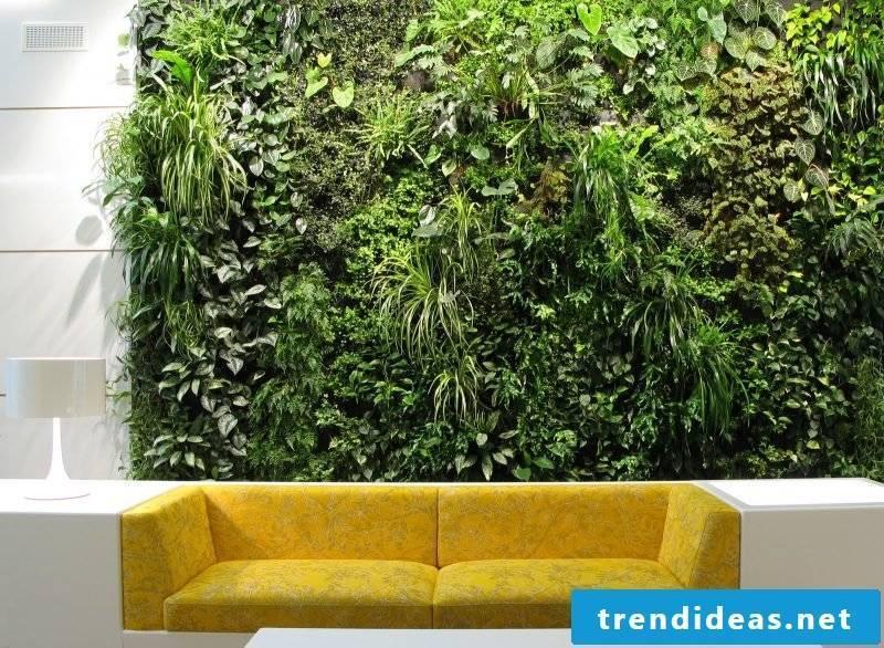 Vertical garden over sofa looks modern and elegant