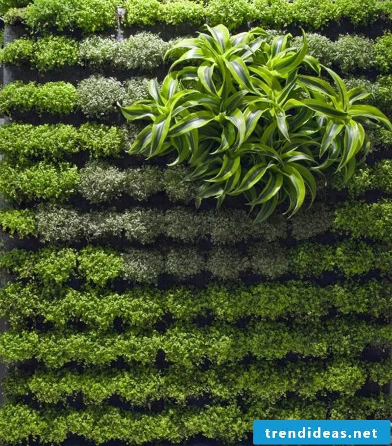 Vertical garden plant with maximum 2 plant species