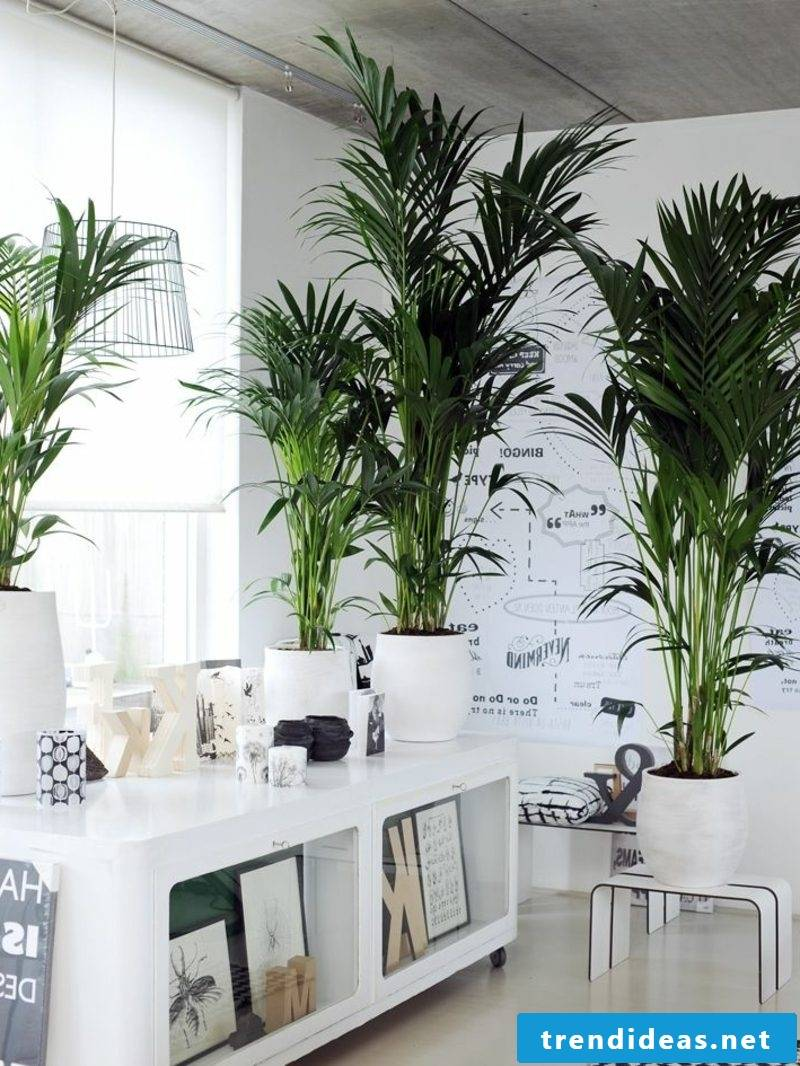 Kentia palm green interiors