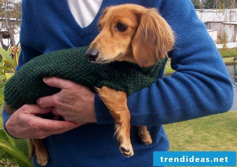dog sweater-knit-before-cold protect
