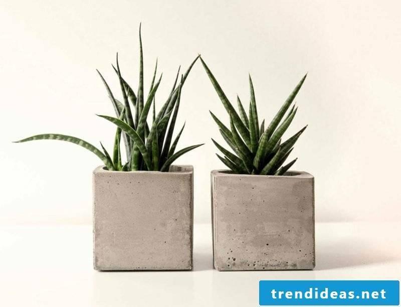 Concrete planters Planters