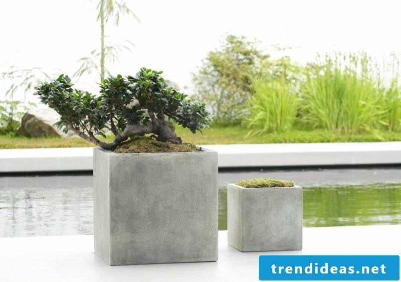 concrete planter craft ideas
