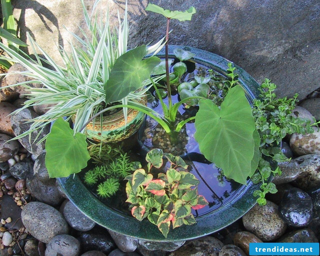 DIY instructions for the mini-pond Create - You can make our own balcony ideas, even if the garden is not available or the conditions for a biotope are not met.