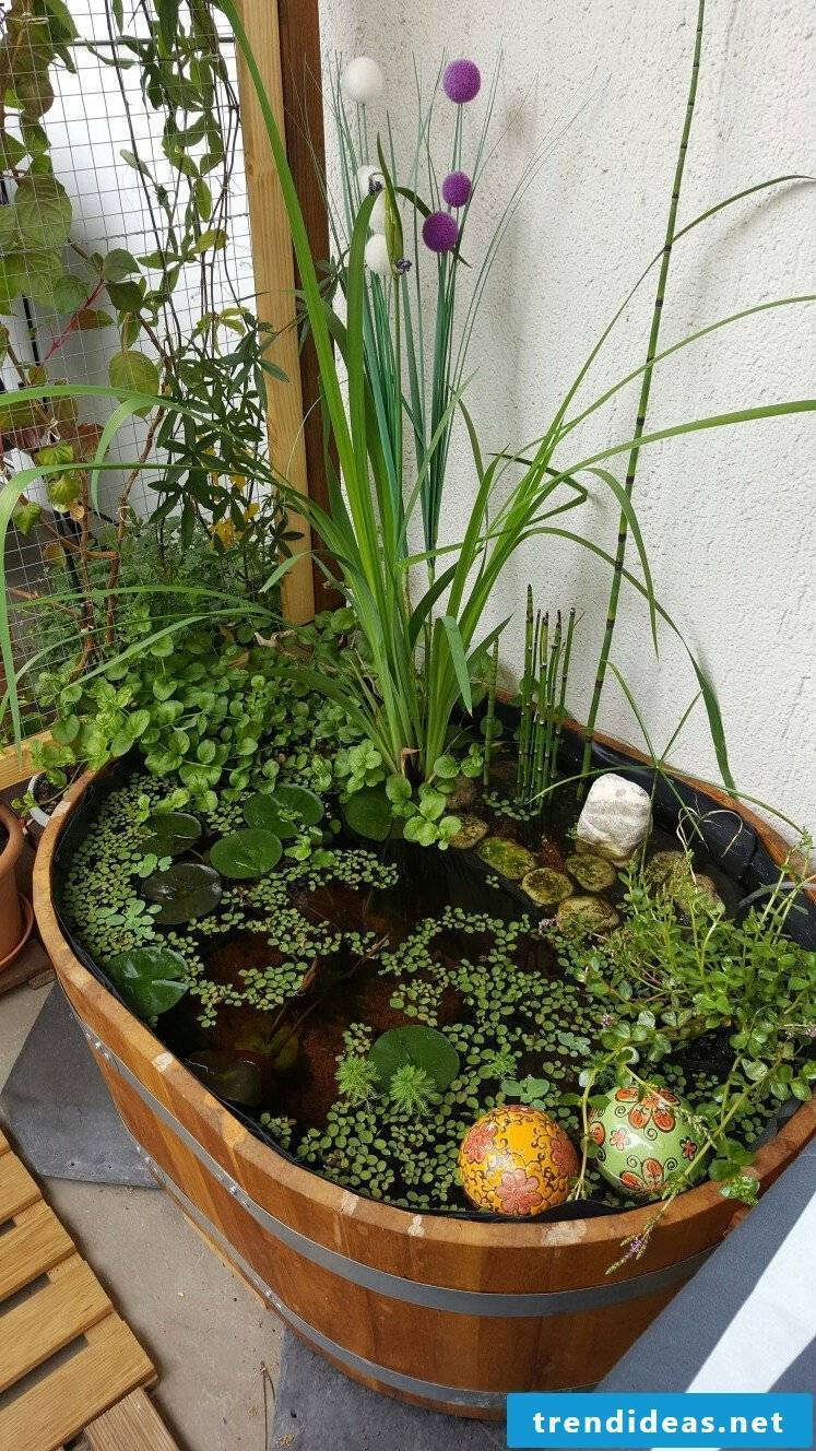 Balcony ideas to make yourself: mini pond in the pot