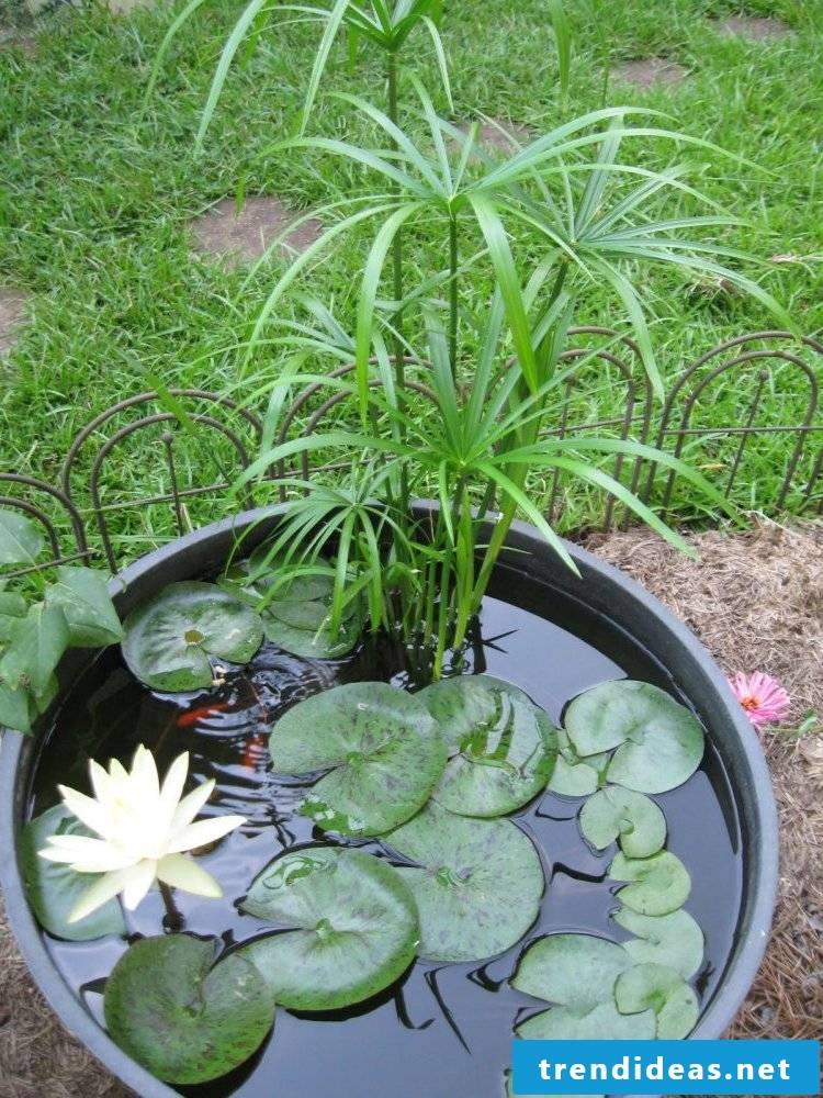 Making your own balcony ideas: DIY instructions for a mini pond in a pot