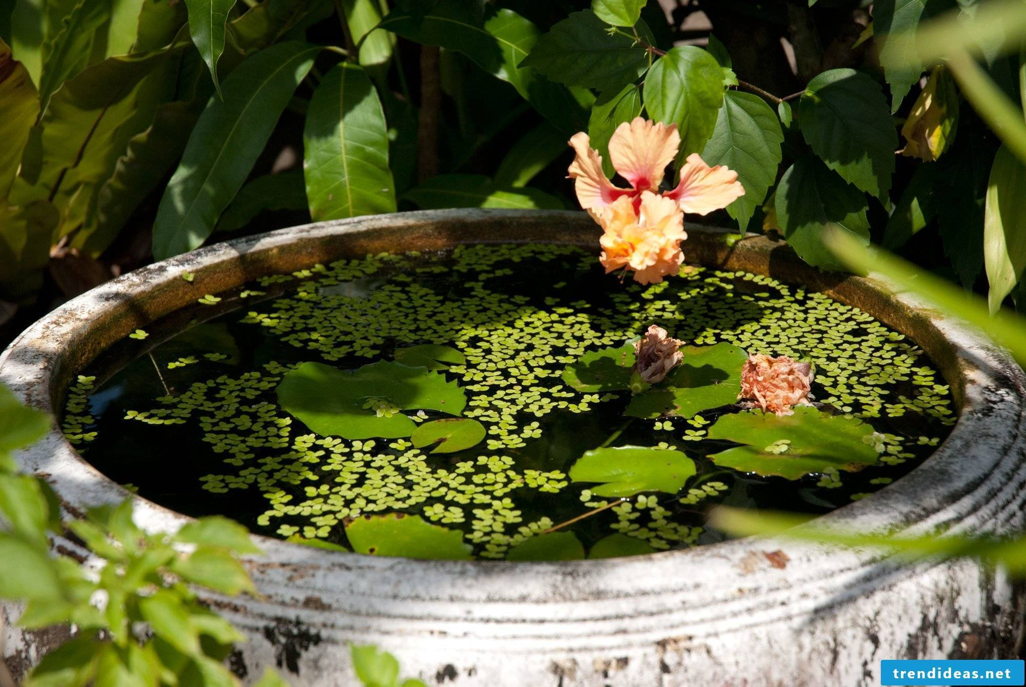 DIY mini pond in the pot and many more great garden ideas for little money can be found in our article