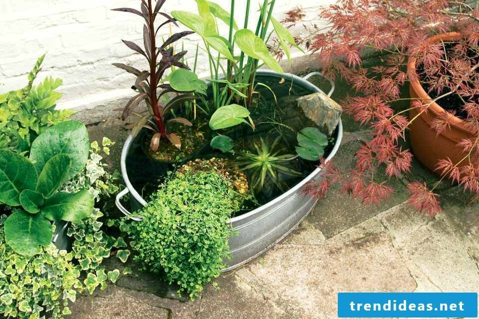 Mini garden design: tips and tricks for a garden on the balcony