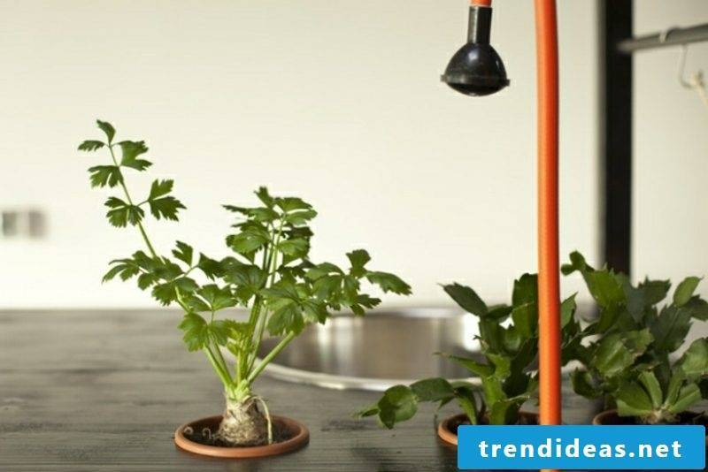 mobile kitchen holder for fresh herbs