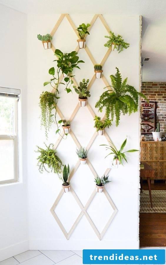 indoor plants determine diy