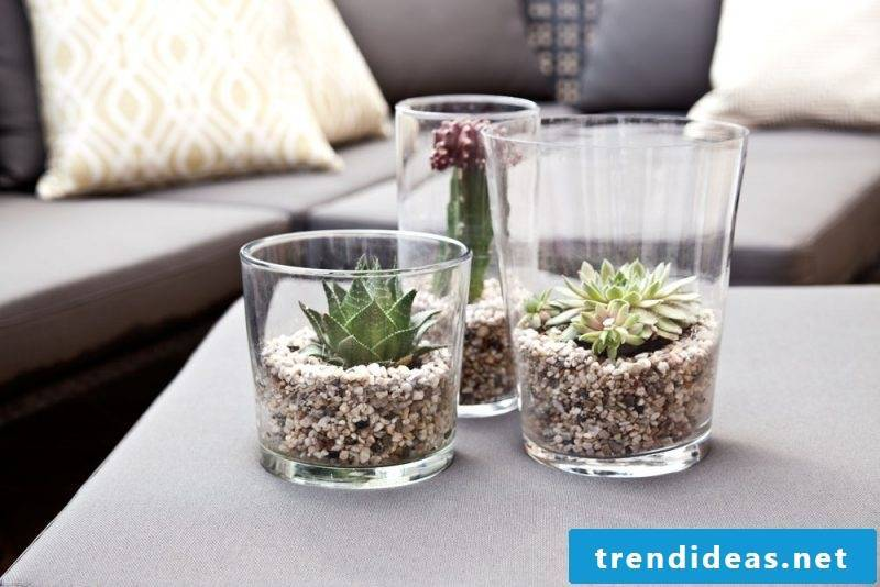 indoor plants determine succulents