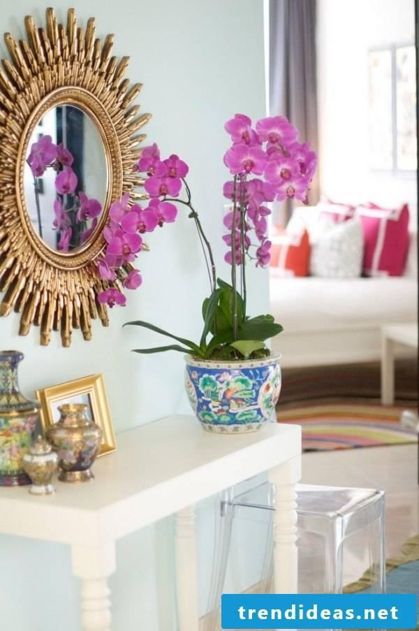 indoor plants determine now