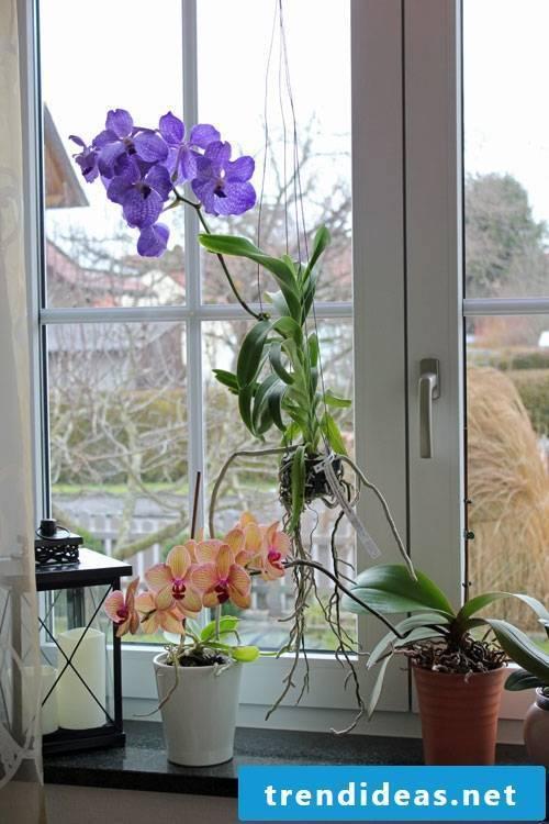 determine all indoor plants