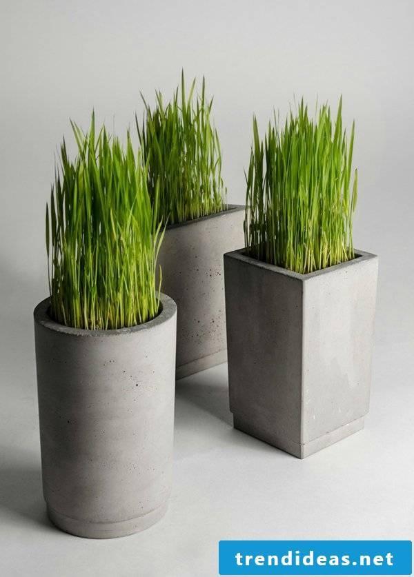 indoor plants determine exactly