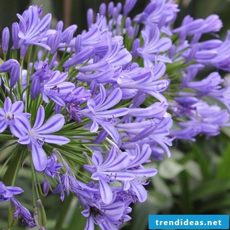 houseplants determine-55