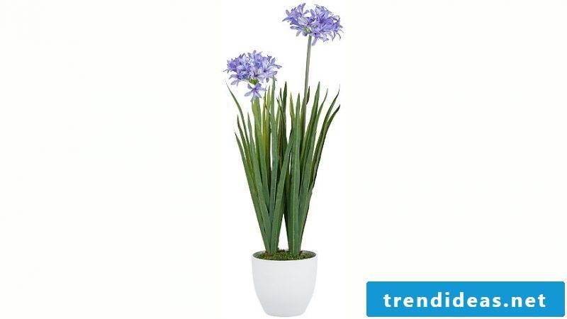 Indoor plants determine professionally
