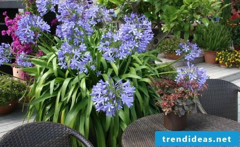 Indoor plants determine blue