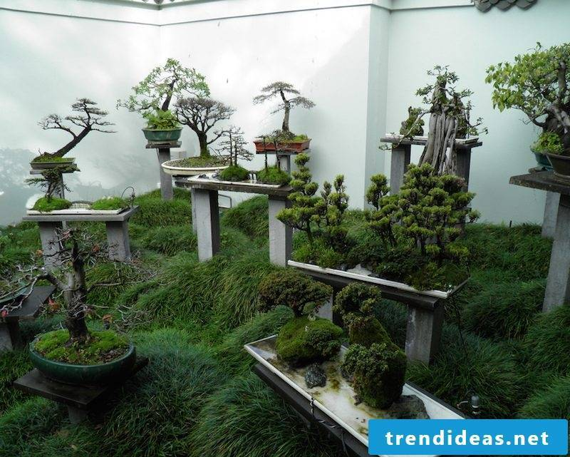 indoor plants determine bonsai