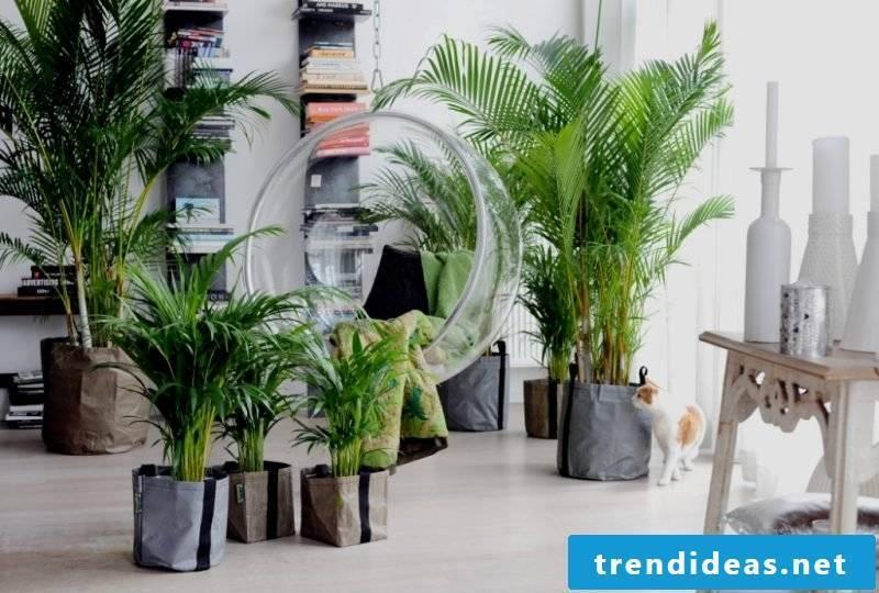 Indoor plants determine palms