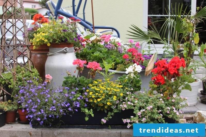 plant the terrace