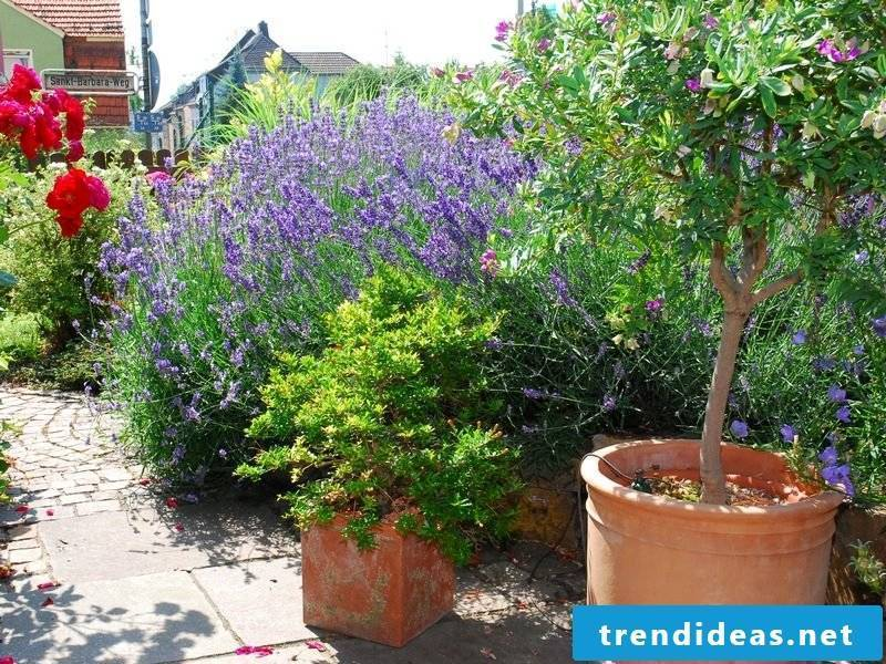 Ideas and inspirations Terrace planting