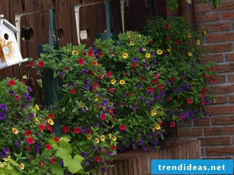 flowering plant species terrace