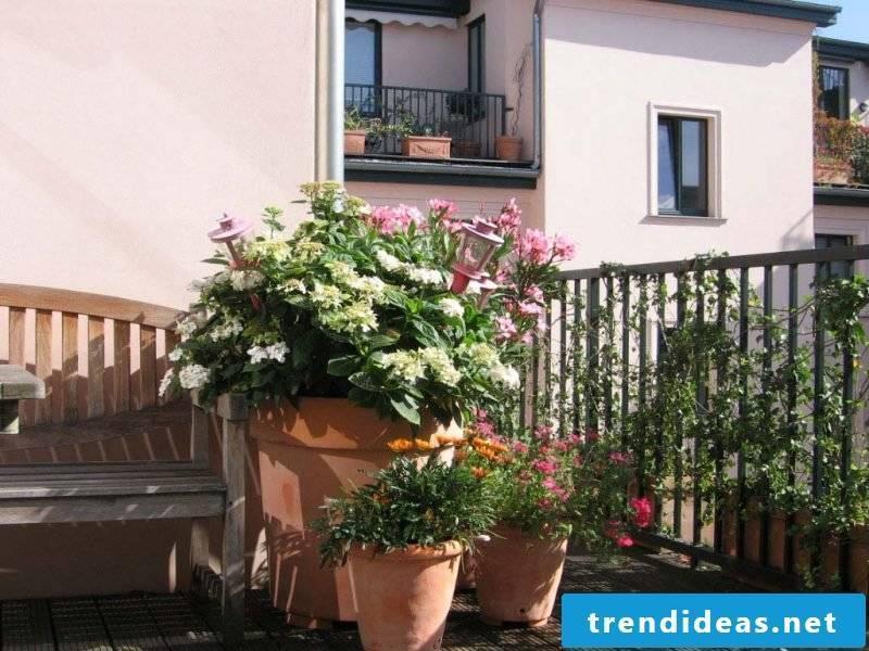 Terrace plants oleander