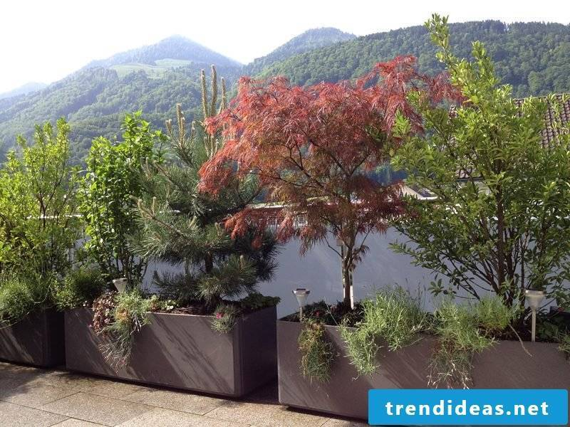 terrace design shadow plants