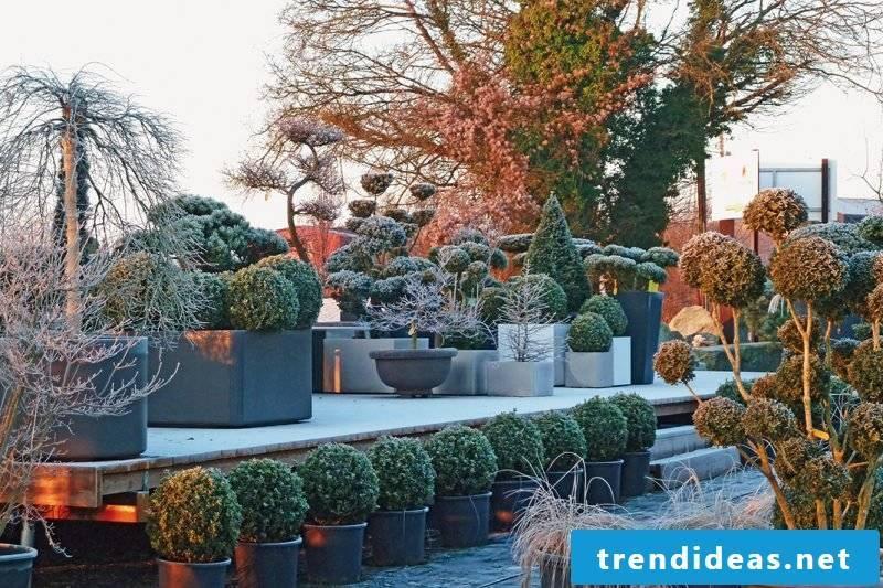 Terraced plant hardy