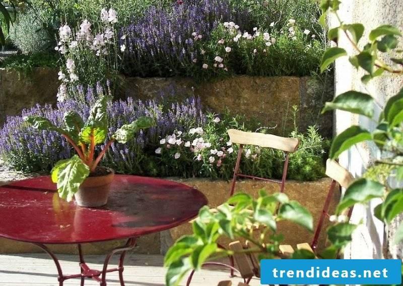 Mediterranean plants terrace