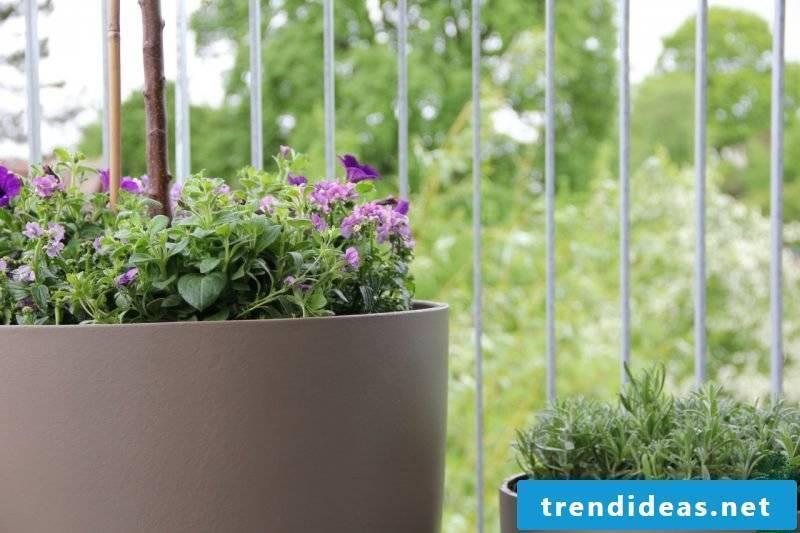 Plant species terrace