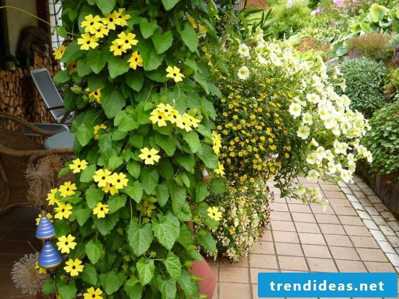 Planting the terrace ideas and inspirations