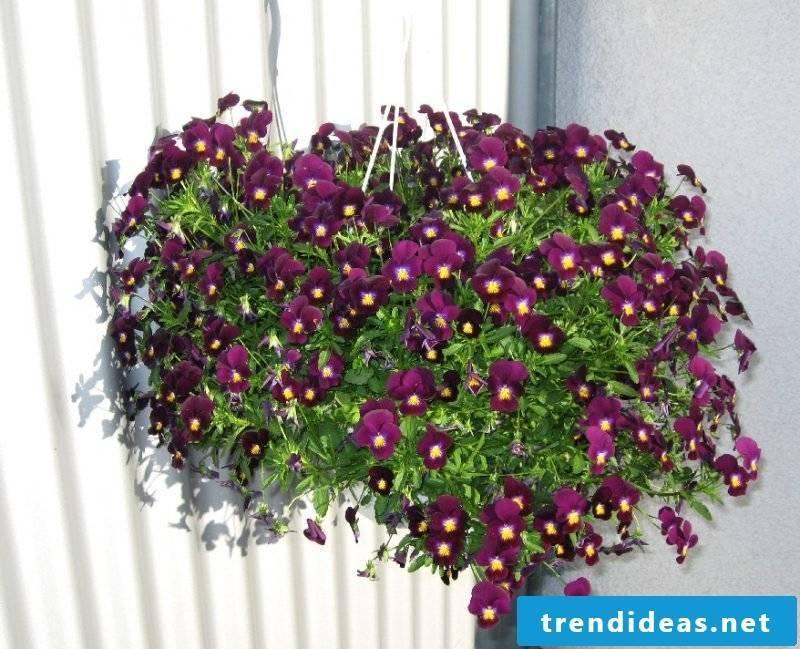 flowering plants terrace