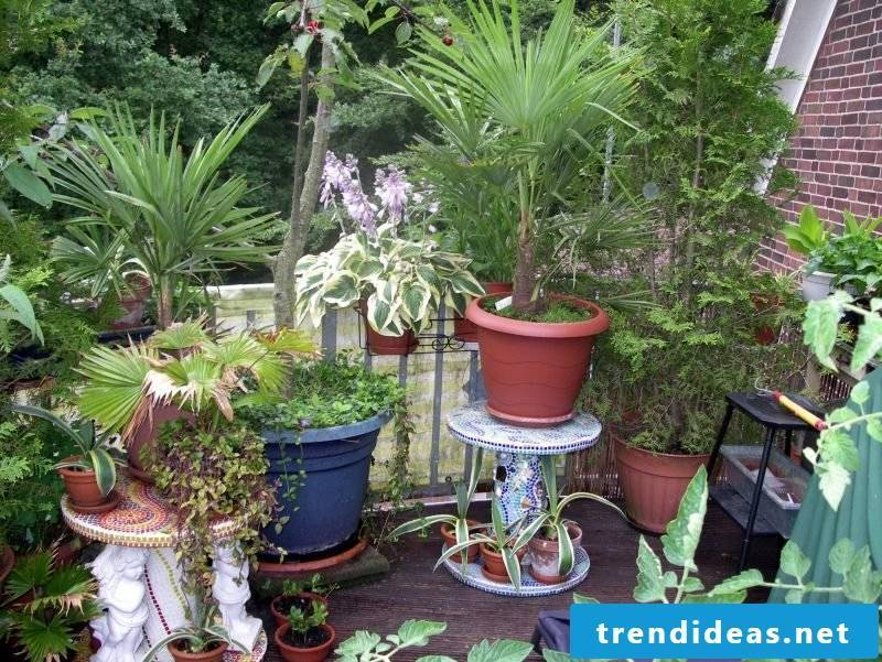 Mediterranean plants