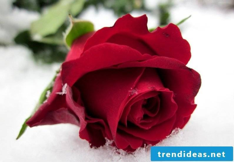 Valentine's Day 2017
