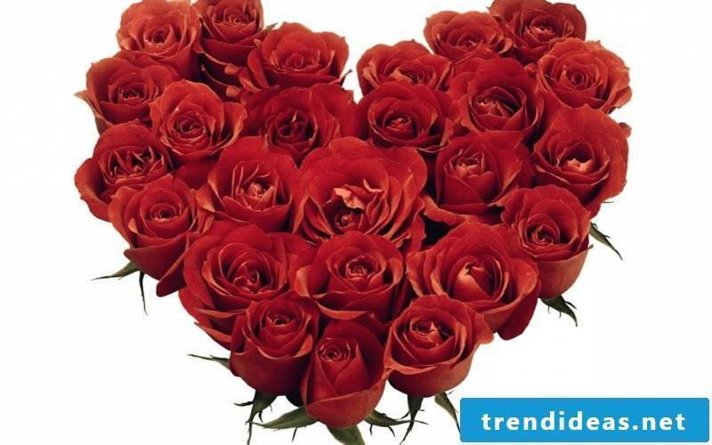 red-Rosered-roses-heart-for-sweetheart